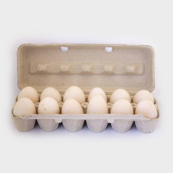 Duck Eggs - Lamblicious